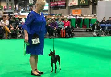crufts-2020-small
